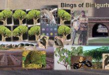 The Bings of Binigurhi